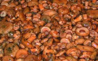 Как засолить рыжики, чтобы они не потемнели и почему грибы чернеют