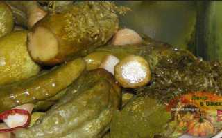 Огурцы в горчице на зиму без стерилизации: соленые, маринованные, салаты