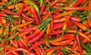 Горький перец по-корейски на зиму: жареный, острый, жгучий