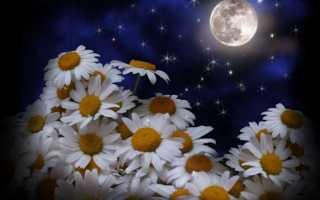 Лунный календарь цветовода на февраль 2020 года: садовые, домашние цветы, фиалки