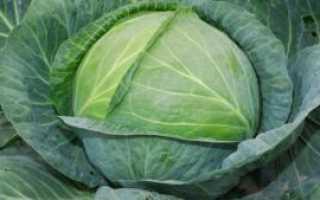 Как солить капусту крупными кусками