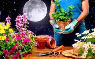 Лунный календарь на март для комнатных, садовых цветов: посевной, советы по посадке и уходу