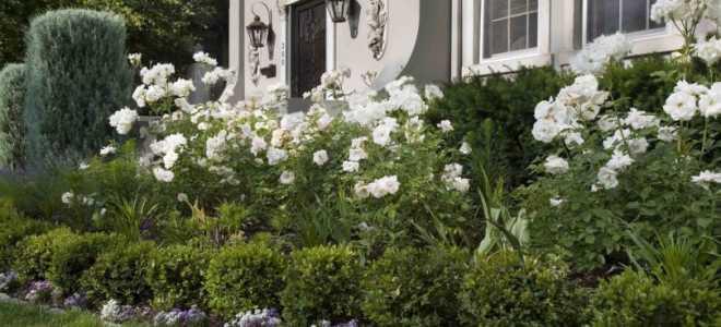 Клумбы с хвойниками и розами: сочетания, композиции, фото в ландшафтном дизайне