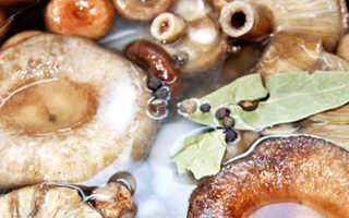 Рыжики закисли: что делать, если соленые грибы забродили