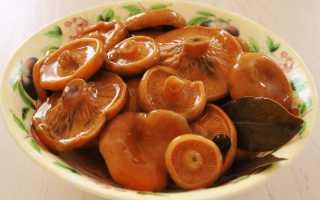 Как солить волнушки и рыжики вместе: вкусные рецепты засолки на зиму