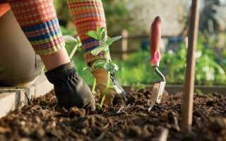 Лунный календарь садовода-огородника на август на 2020 год: посевной, таблица благоприятных дней