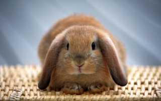 Кролики: породы, разведение, выращивание, кормление и уход