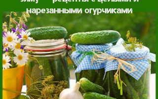 Салат из огурцов с петрушкой на зиму: как засолить огурцы с петрушкой на зиму