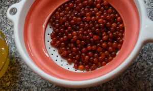 Калина с медом: полезные свойства и противопоказания