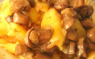Лисички с картошкой в сметане: на сковороде, в духовке, мультиварке