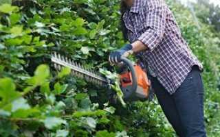 Кусторез: как выбрать инструмент для работы в саду