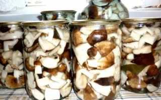 Подтопольники: как солить на зиму горячим и холодным способом, вкусные рецепты