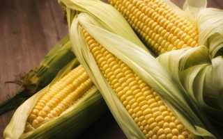 Кукуруза: польза и вред для здоровья, калорийность, химический состав