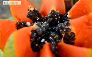 Папайя: польза и вред для организма, калорийность, противопоказания