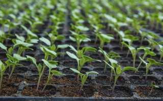 Посадка капусты на рассаду в 2020 году