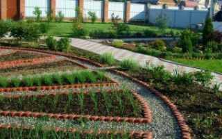 Лекарственный огород: для чего нужен, плюсы выращивания, советы