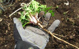 Как избавиться от одуванчиков на участке навсегда: средства и методы борьбы на газоне, на садовом