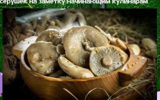 Маринованные серушки: пошаговые рецепты приготовления на зиму с уксусом