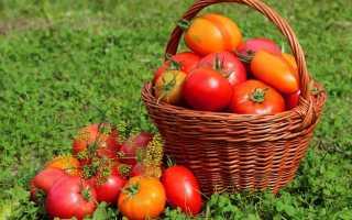 Фосфорные удобрения для томатов