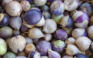 Физалис: полезные свойства, как употреблять в пищу, ягода или фрукт, противопоказания