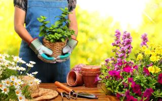 Лунный календарь цветовода на декабрь 2020 года: комнатные растения и цветы