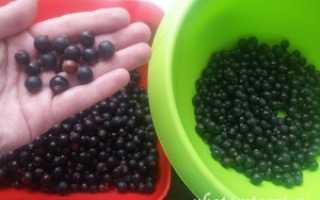 Компот из черной смородины на зиму: простые рецепты в 3-х литровых банках, в кастрюле, в мультиварке
