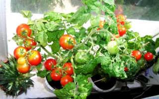 Помидоры Балконное чудо: как выращивать, фото, отзывы