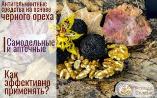 Черный орех: полезные свойства и противопоказания, как принимать от паразитов
