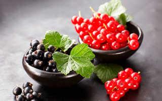 Самогон на черной и красной смородине: рецепты, как настоять в домашних условиях