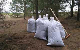 Грунт для хвойных растений: оптимальный состав почвы для хвойников