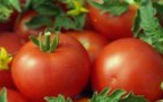 Картофель: описание и фото