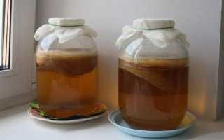 Как хранить чайный гриб в домашних условиях, если нужен перерыв: до следующего лета, при длительном