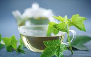 Настойка на листьях черной смородины и ветках: рецепты на водке, самогоне