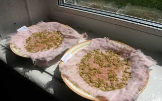 Подготовка семян помидоров к посадке на рассаду