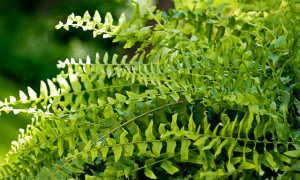 Сульфат магния для растений: как использовать для хвойных, комнатных растений, цветов