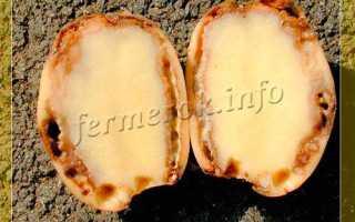 Кольцевая гниль картофеля: фото, описание и лечение