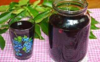 Компот из черемухи на зиму: польза и вред, простые рецепты из красной, черной и сушеной черемухи