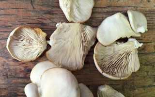 Вешенки: как чистить и мыть грибы перед приготовлением