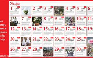 Лунный календарь огородника и садовода на ноябрь 2020 года: посевной, благоприятные дни