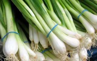 Посадка лука весной на зелень (на перо) в теплице: когда сажать, как вырастить из семян,