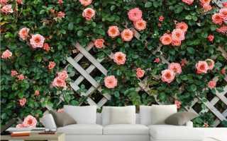 Почему не цветет плетистая роза: причины