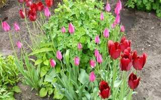 Посадка тюльпанов осенью на Урале