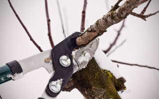 Как обрезать яблони зимой