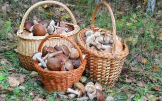 Как чистить и мыть грибы рыжики: перед засолкой, для варки, видео