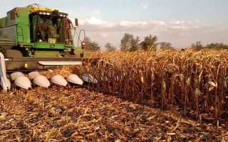 Уборка кукурузы на зерно: видео, сроки, способы