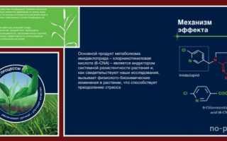 Конфидор: инструкция по применению, отзывы, состав, действующее вещество, расход