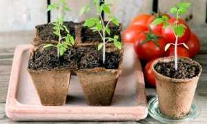 Лунный календарь на 2020 год для Урала: посевной (посадочный), посадка рассады, корнеплодов, овощей, кустарников, деревьев