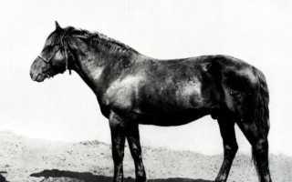 Кушумская порода лошадей: описание, отзывы