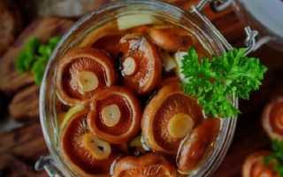 Быстрая засолка рыжиков: экспресс-рецепты приготовления на зиму