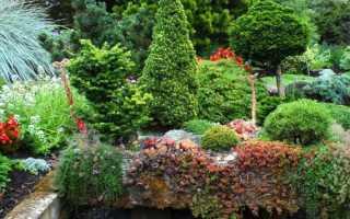 Ель Коника в ландшафтном дизайне: фото, способы применения